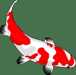 red-herring-image
