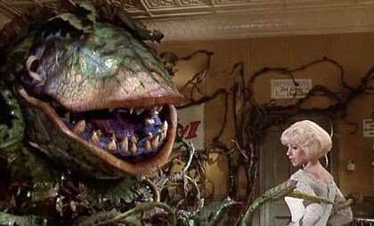 "Comparing the Little Shop of Horrors' Venus Fly Trap (Audrey II) to MG Premium Ltd. and their desire for a ""drop of blood."""